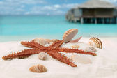 Sea star — Stock Photo