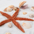 Sea star — Stock Photo #51230427