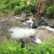 Stock Video: Pof lush jungle stream.