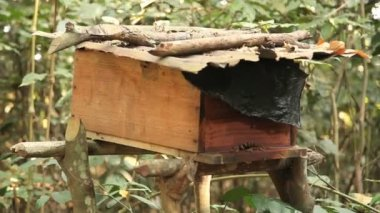 Beehive in the Congo — Stock Video