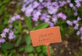 Stellaria flowers — Stok fotoğraf