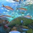 Yellowtailed Snapper and other tropical fish swimming in a coral reef — Stock Video #41792579