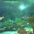 Large sharks in a colorful coral reef — Stock Video #42008599