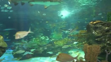 Large sharks in a colorful coral reef — Stock Video