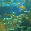 Huge schools of tropical fish swimming in a colorful coral reef — Stock Video
