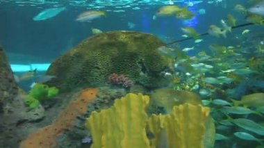 Large schools of fish swim in a coral reef — Stock Video