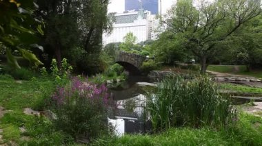 Central Park with Arched Bridge and flowers, New York — Stock Video