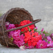 Basket with blooms — Stock Photo #40435789