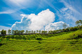 White cloud, Green Grass and Blue Sky — Stock Photo