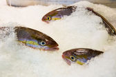 Fresh fish on ice decorated — Stock Photo
