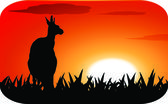 Kangaroo at sunset — Stock Vector