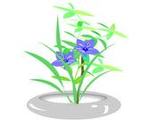 Orchid in pots — Vector de stock