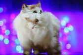 Hračka kočka — Stock fotografie
