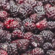 Black raspberries closeup background — Stock Photo #48278607