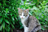 Kitten in Garden — Stock Photo
