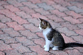 Kitten on bricks — Stock Photo