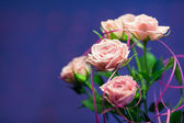 Pink rose with turquoise and blue circle background — Stock Photo