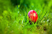 Easter traditional egg in the fresh spring grass — Stock Photo