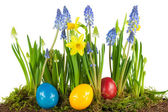 Colorful Easter eggs with spring flowers — Stock Photo