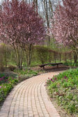 Springtime in garden — Stock Photo