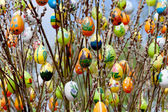 Easter eggs with pussy willow — 图库照片