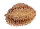 Tropisk frukt durian — Stockfoto
