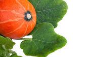 Zucca con foglie — Foto Stock