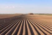 Chřest pole — Stock fotografie