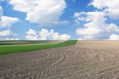 Fields in springtime — Stock Photo