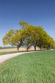 Estrada rural com avenida verde — Fotografia Stock