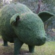 Stock Photo: Topiary pig
