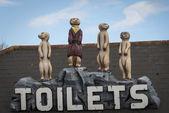 Meerkat toilet sign — Stock Photo