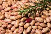 BEANS AND ROSEMARY — Stock Photo