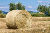 Hay of bale in a wheat field — Stock Photo