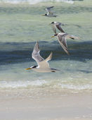Sea Gulls in Jervis Bay — Stock Photo