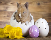 Easter eggs and bunny — Stock Photo