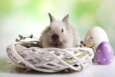 Králík v košíku velikonoce, velikonoční vejce — Stock fotografie