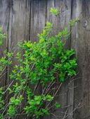 太陽の光と緑を葉します。 — ストック写真