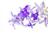 Petrea volubilis flower — Stock Photo