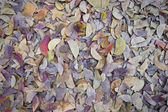 Brown fallen leaves laying on the ground — Stock Photo