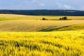 Agricultural Landscape of South Moravia — Stock Photo