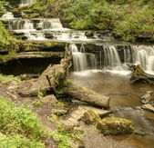 Scalebar Force, inthe ravine.  — Stock Photo