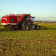 Time to harvest the sugar beet. Lincolnshire — Stock fotografie