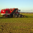 Time to harvest the sugar beet. Lincolnshire — Stockfoto
