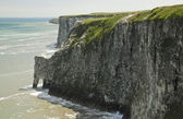 The chalk cliffs, at Bempton in Yorkshire,  England. — Stock Photo