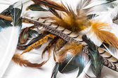 Bird Feathers — Stock Photo