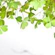 Clover Clusters — Stock Photo #46477753