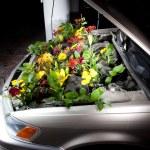 Green Eco Car — Stock Photo #46629929