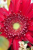 Kwiat boquet — Zdjęcie stockowe