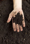 Hands Holding Dirt — Photo